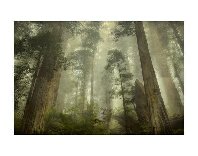 Damnation Trail-David Lorenz Winston-Art Print