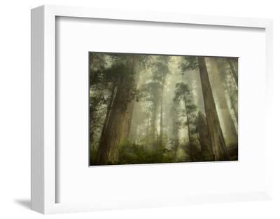 Damnation Trail-David Lorenz Winston-Framed Art Print