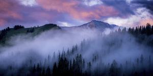 Evergreens Fog by Dan Ballard