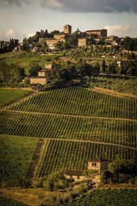 Tuscany Vineyard 02 by Dan Ballard