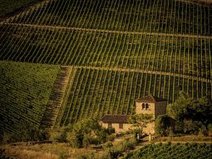 Vineyard by Dan Ballard