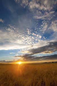 Wheat Field Sunset by Dan Ballard