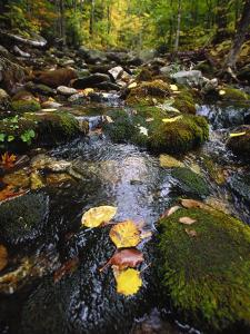 Stream in the Woods by Dan Gair