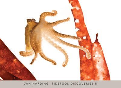 Tidepool Discoveries II