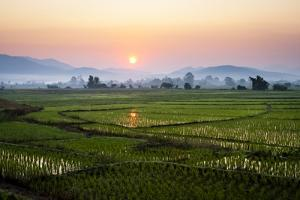 The Sun Sets Behind Foggy Hills and Expansive Rice Paddy Fields Near Chiang Mai, Thailand by Dan Holz