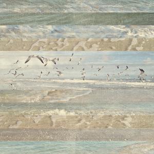 Flying Beach Birds I by Dan Meneely