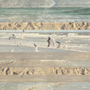 Flying Beach Birds II by Dan Meneely