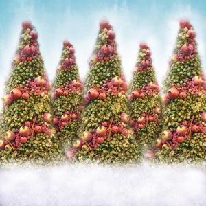 Oh Christmas Trees by Dan Meneely