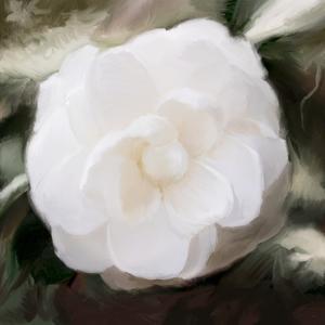 White Flower by Dan Meneely