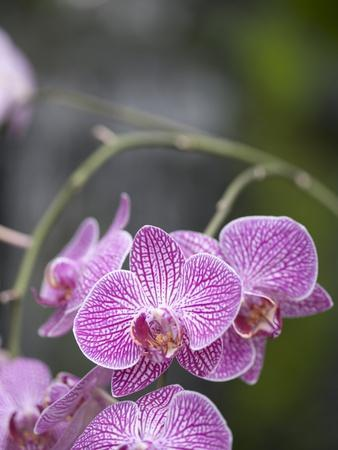Rare, beautiful orchids bloom in a Florida garden
