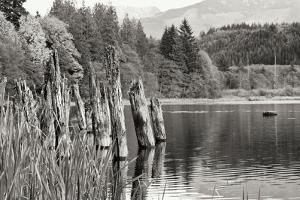 Baker Lake Pilings by Dana Styber