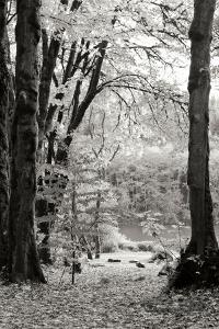 Baker Lake Trail II by Dana Styber