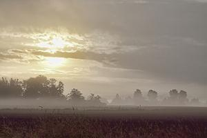 Foggy Morning I by Dana Styber