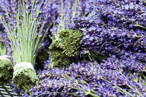 Lavender Bunches I by Dana Styber
