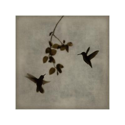 Dance in Flight II-Chris Donovan-Giclee Print