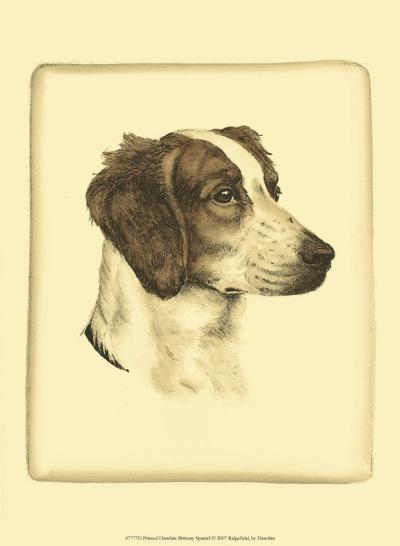 Danchin Brittany Spaniel-Danchin-Art Print