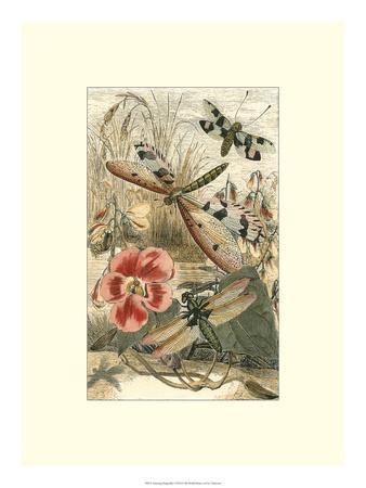 https://imgc.artprintimages.com/img/print/dancing-dragonfly-i_u-l-ph6md10.jpg?p=0