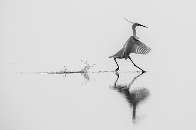 Dancing on the Water-mauro rossi-Photographic Print