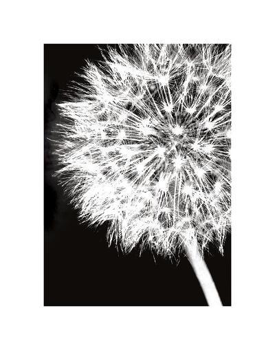 Dandelion Crop-Jenny Kraft-Art Print