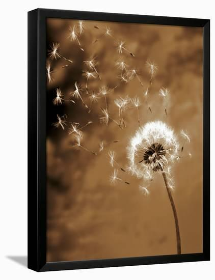 Dandelion Seed Blowing Away-Terry Why-Framed Stretched Canvas Print