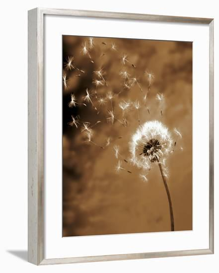 Dandelion Seed Blowing Away-Terry Why-Framed Premium Photographic Print