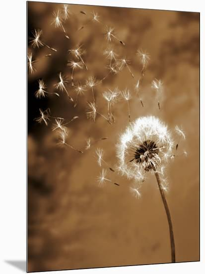 Dandelion Seed Blowing Away-Terry Why-Mounted Premium Photographic Print
