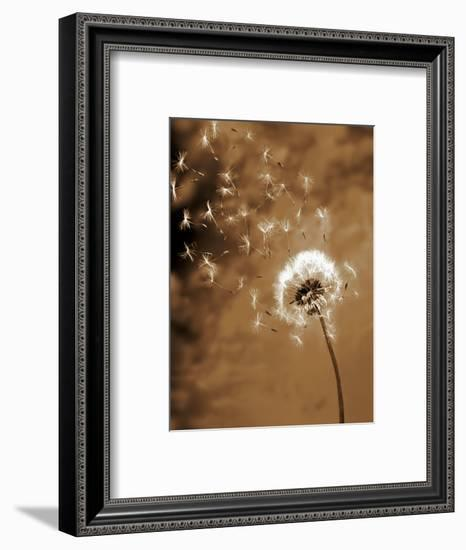 Dandelion Seed Blowing Away-Terry Why-Framed Photographic Print