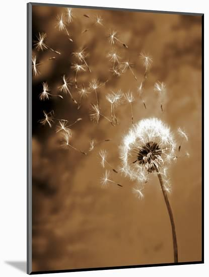 Dandelion Seed Blowing Away-Terry Why-Mounted Photographic Print