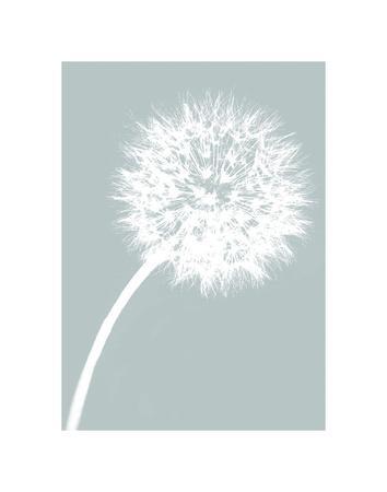 https://imgc.artprintimages.com/img/print/dandelion-tilt-blue_u-l-f8cfuc0.jpg?p=0