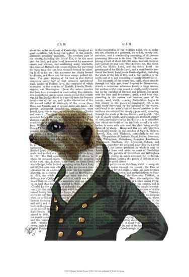 Dandy Meerkat Portrait-Fab Funky-Art Print