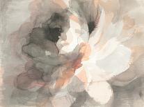 Beautiful Butterflies-Danhui Nai-Art Print