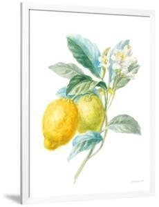 Floursack Lemon II on White by Danhui Nai