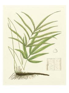 Eaton Ferns I by Daniel C. Eaton