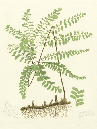 Eaton Ferns II