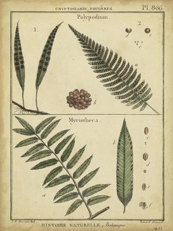 Diderot Antique Ferns III