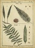 Diderot Antique Ferns III-Daniel Diderot-Art Print