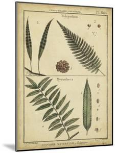 Diderot Antique Ferns III by Daniel Diderot