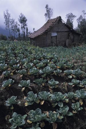 Farm Building In Bromo-Tengger-Semeru National Park, Java, Indonesia