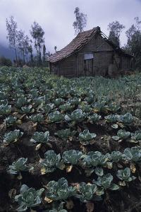 Farm Building In Bromo-Tengger-Semeru National Park, Java, Indonesia by Daniel Gomez