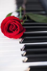 Close up of Red Rose Lying on Piano Keys by Daniel Grill
