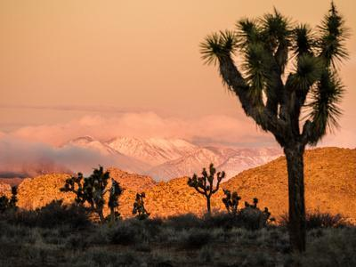 A Look At The Many Layers Of Joshua Tree National Park