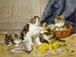 Playful Kittens by Daniel Merlin