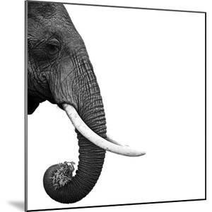 Elephant by Daniel Pupius