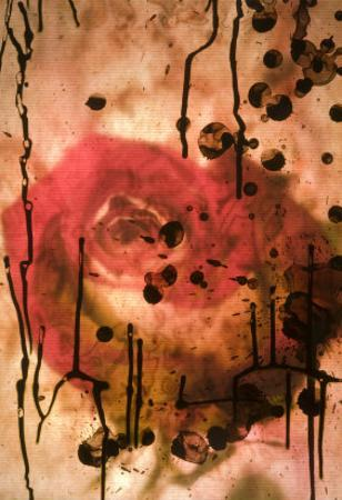 Red Rose Through Paper with Ink Drawing