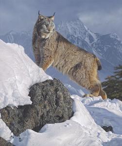 Austere Ascent (Lynx) by Daniel Smith