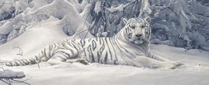 White Tiger by Daniel Smith