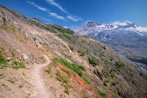 Trail on Hillside at Mount St. Helens by Danielle D. Hughson