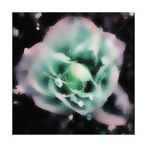 Evening Rose I by Danielle Harrington