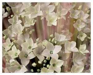 Soft Floral I by Danielle Harrington