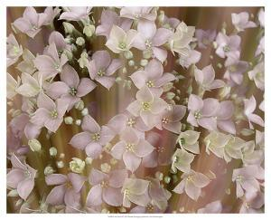 Soft Floral II by Danielle Harrington